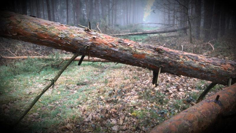 NRW-Wälder vor dem Kollaps (Foto: SAT.1 NRW)