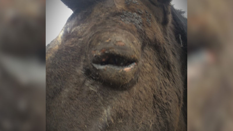 Pferd in Flammen (Foto: SAT.1 NRW)