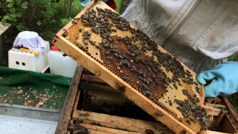 Bienenstöcke zerstört (Foto: SAT.1 NRW)