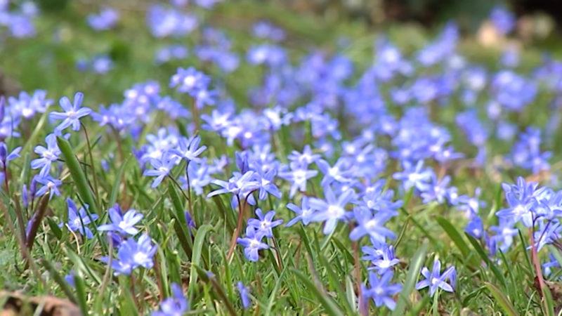 Frühling (Foto: SAT.1 NRW)