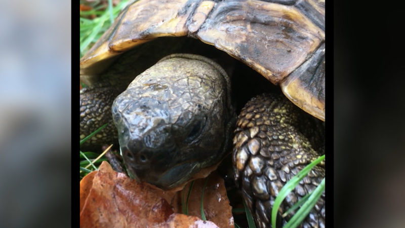 Schildkröte als Wetterfrosch (Foto: SAT.1 NRW)
