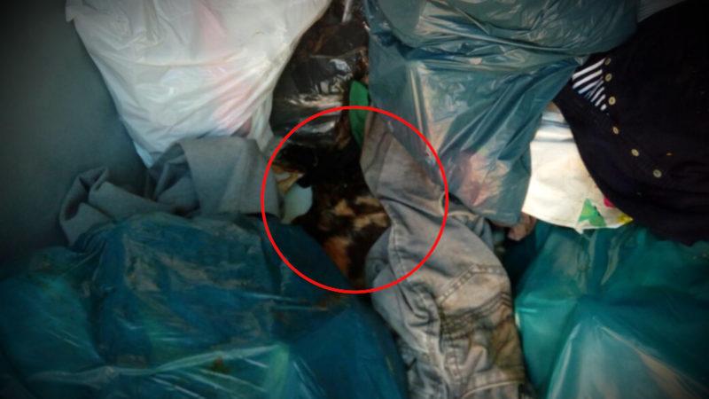 Schon wieder tote Katzen im Müll (Foto: SAT.1 NRW)