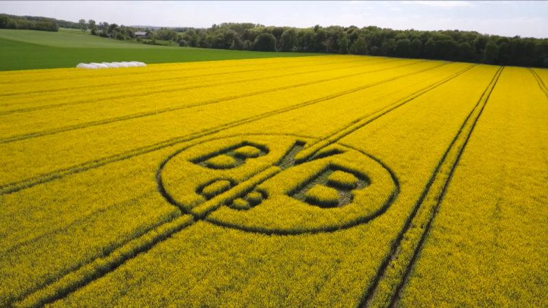 Rapsfeld mit BVB Logo (Foto: SAT.1 NRW)