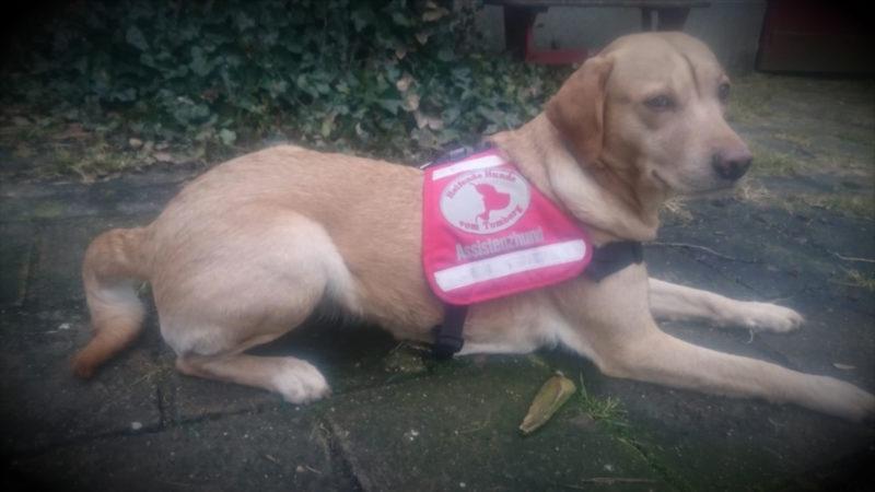 Hund für Epileptiker (Foto: SAT.1 NRW)