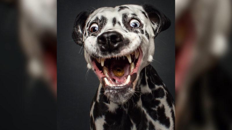 Ein Hund im Büro? (Foto: SAT.1 NRW)