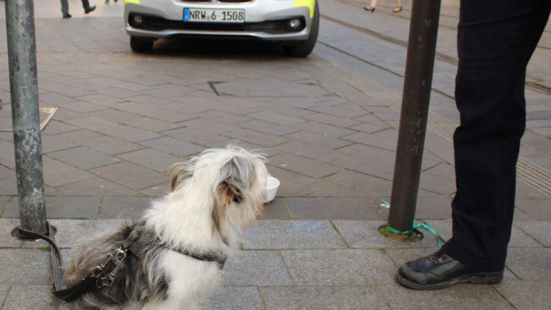 Hundemafia in Münster? (Foto: SAT.1 NRW)