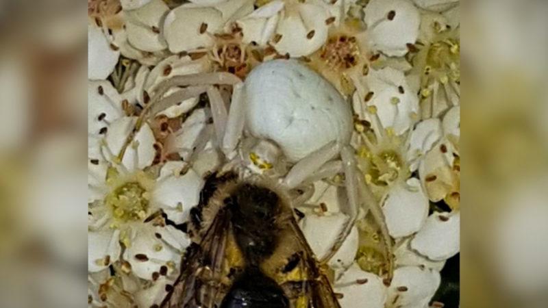 Achtung, weiße Spinne! (Foto: SAT.1 NRW)