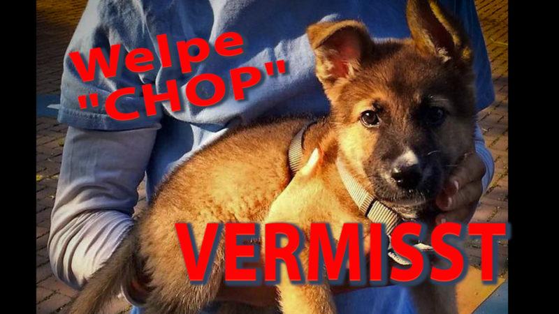 """Welpe """"Chop"""" verschwunden (Foto: SAT.1 NRW)"""