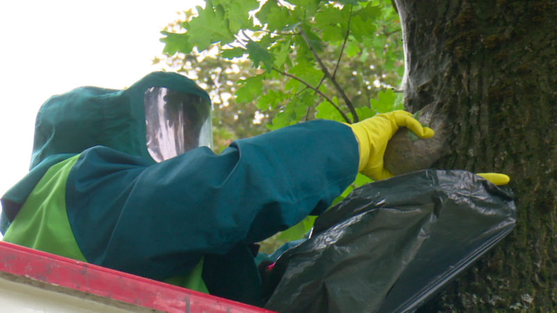 Gefährliche Raupen breiten sich aus (Foto: SAT.1 NRW)