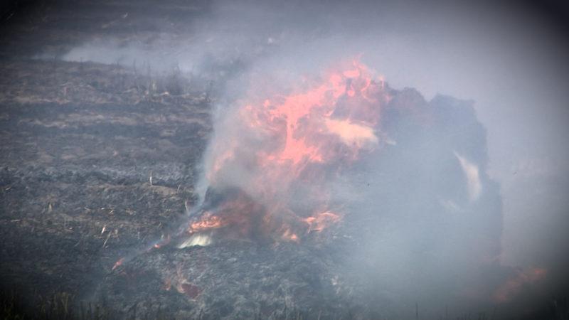 Feuer in Weeze (Foto: SAT.1 NRW)