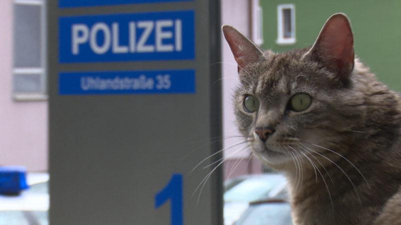 Bochums Kriminal-Katze (Foto: SAT.1 NRW)