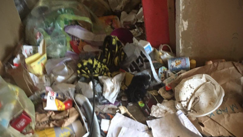 Hundeelend - Vier Tiere leben ein Jahr in einer Messie-Wohnung (Foto: SAT.1 NRW)