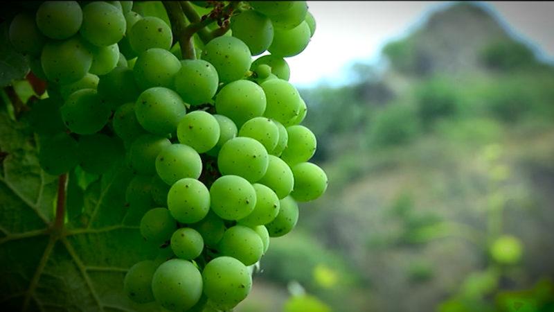Wein - made in NRW + GEWINNSPIEL (Foto: SAT.1 NRW)