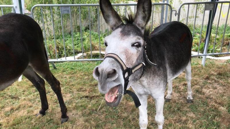 Wer sie liebt, der schiebt - Eselrennen bei Soest (Foto: SAT.1 NRW)
