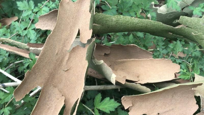 Unsere Bäume sind nackt (Foto: SAT.1 NRW)