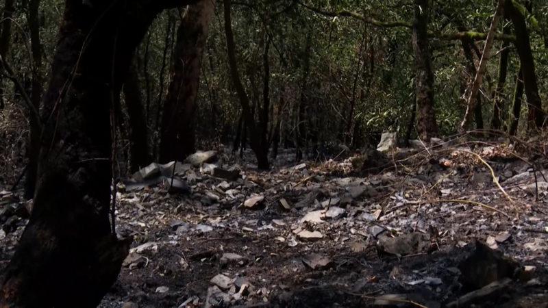 Löscharbeiten abgebrochen - Waldbrand in Altena gestaltet sich als schwierig (Foto: SAT.1 NRW)