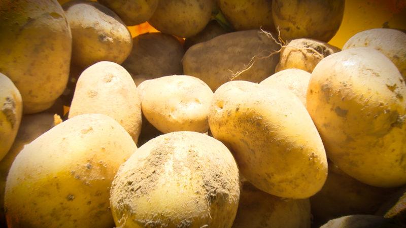 Dürrefolgen: Kartoffel wird teurer (Foto: SAT.1 NRW)