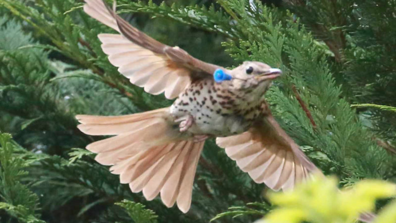 Pfeil in der Kehle - Ein Tierquäler schießt auf Singvögel (Foto: SAT.1 NRW)