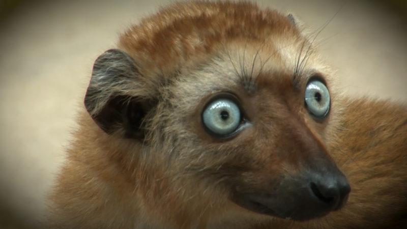 Affe mit blauen Augen (Foto: SAT.1 NRW)
