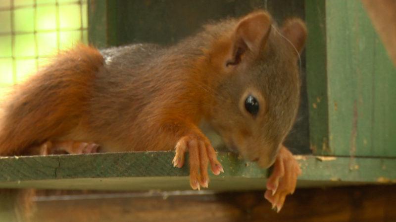 Eichhörnchen finden keine Nahrung (Foto: SAT.1 NRW)