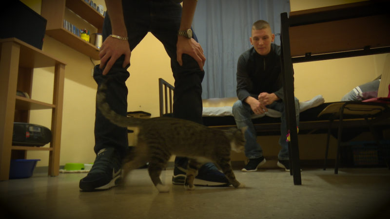 Katzen hinter Gitter (Foto: SAT.1 NRW)