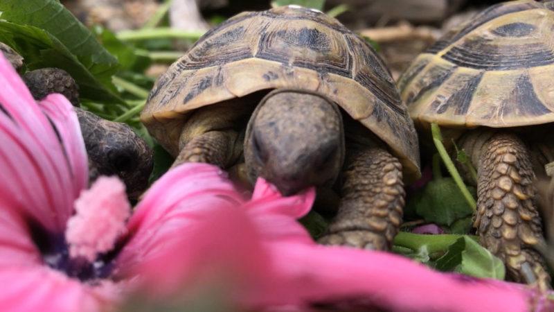 Schildkröten suchen neues Zuhause (Foto: SAT.1 NRW)
