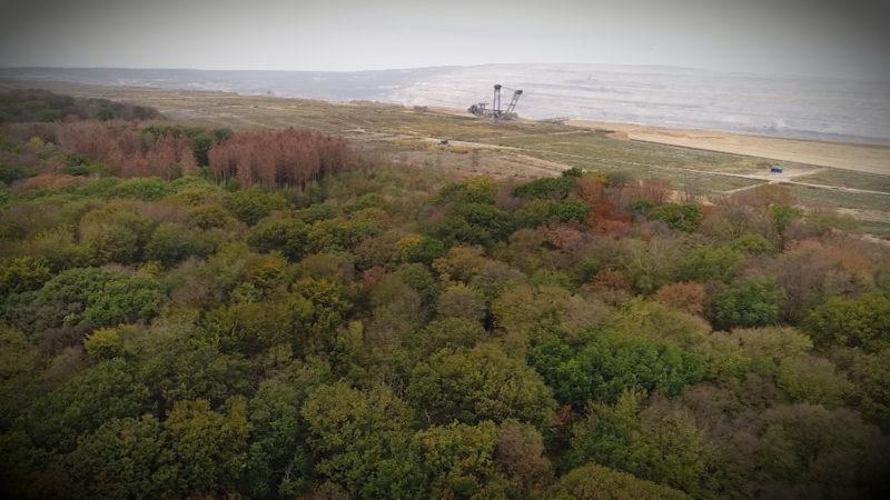 Hambacher Forst kostet RWE Milliarden (Foto: SAT.1 NRW)