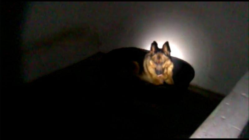 Hund eingesperrt im Keller (Foto: SAT.1 NRW)