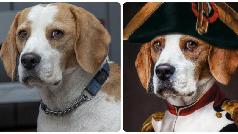 Künstler malt SAT.1-Hundeporträt (Foto: SAT.1 NRW)