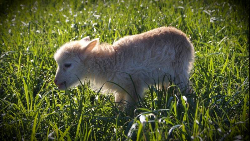 Kopfgeld auf Tierquäler (Foto: SAT.1 NRW)