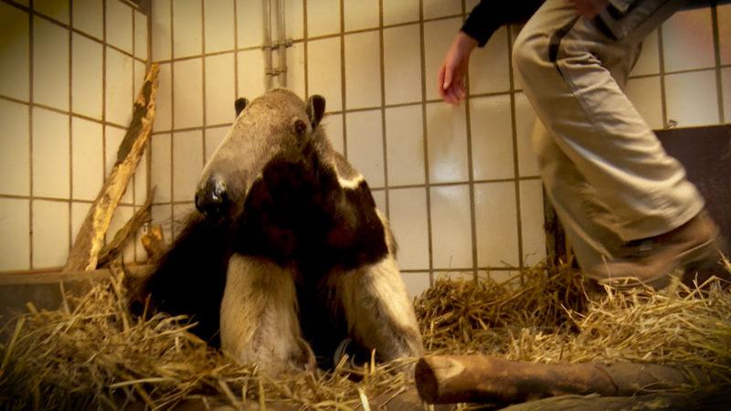 Ameisenbären auf Diät (Foto: SAT.1 NRW)