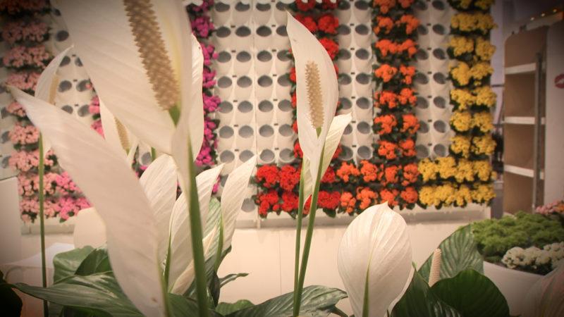 Topf-Trends auf der Blumenmesse (Foto: SAT.1 NRW)