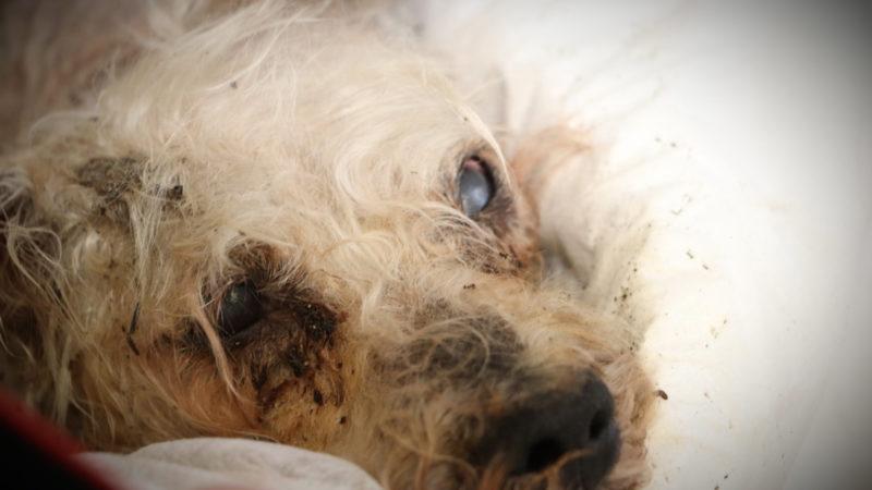 Hund in den Fluss geworfen (Foto: SAT.1 NRW)
