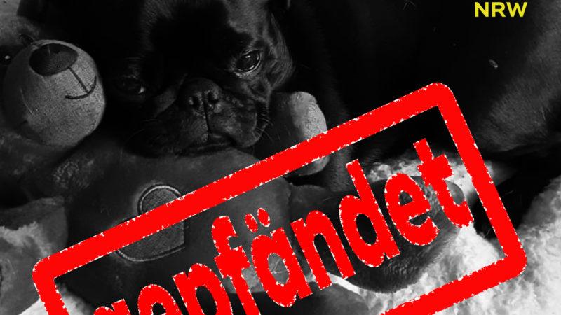 Gepfändeter Hund bei Ebay verkauft (Foto: SAT.1 NRW)