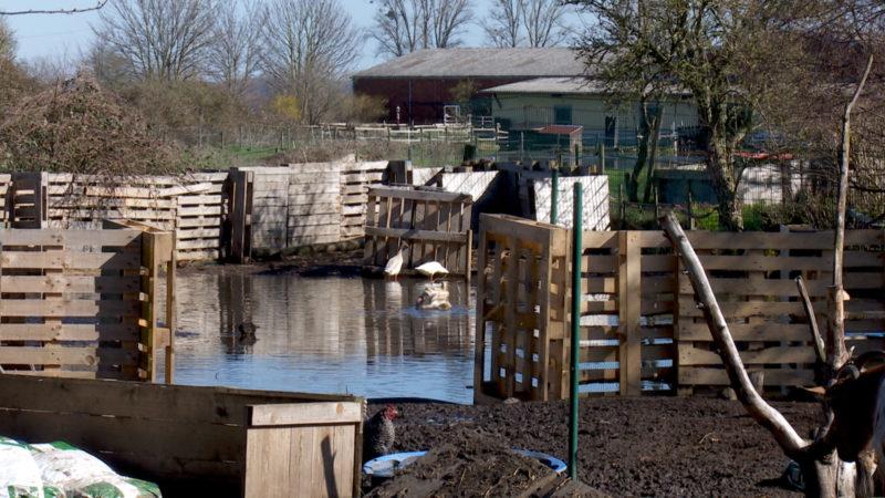 Gnadenhof wieder vor dem Aus (Foto: SAT.1 NRW)