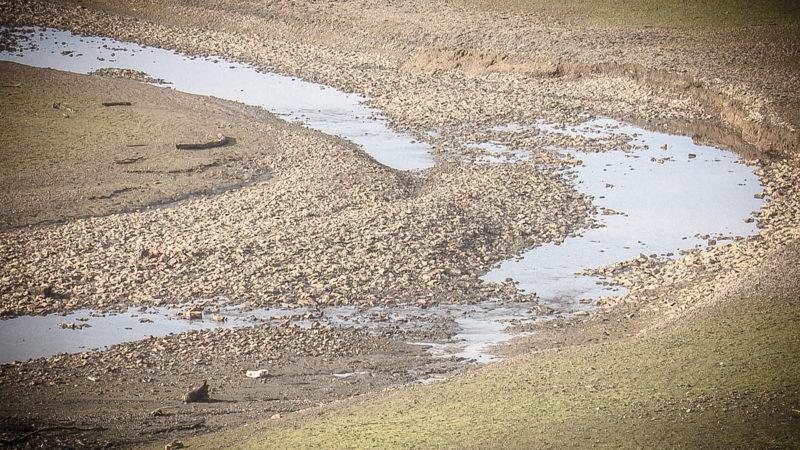 Angst vor Dürresommer (Foto: SAT.1 NRW)