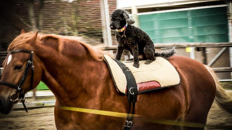 Hunde reiten auf Pferden (Foto: SAT.1 NRW)