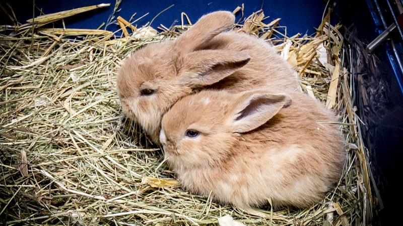 Kaninchen im Gebüsch ausgesetzt (Foto: SAT.1 NRW)