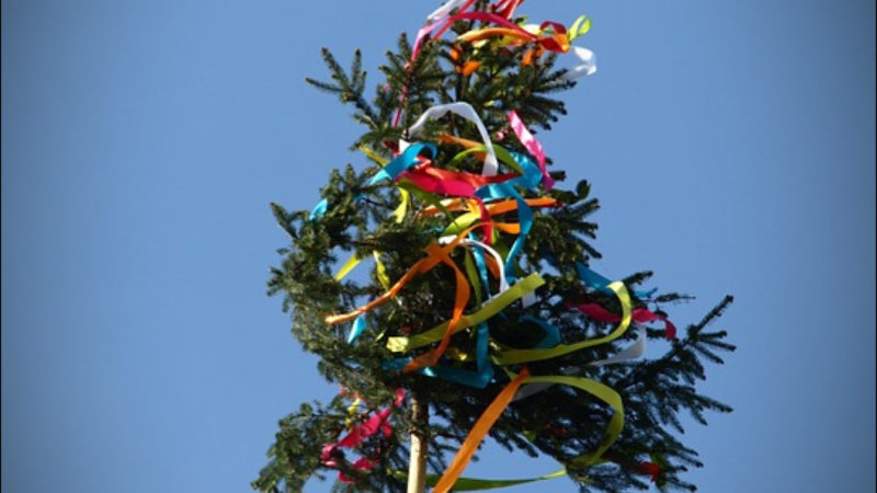 MAIBAUM-TRADITION (Foto: SAT.1 NRW)
