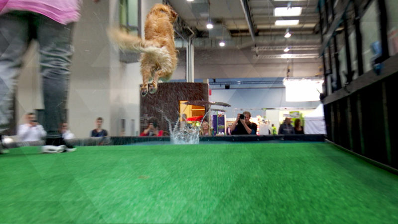 Dog Diving - Hundeweitsprung in Dortmund (Foto: SAT.1 NRW)