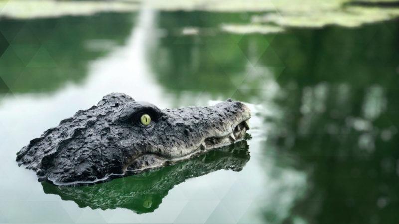 Vermeintliches Krokodil sorgt für Aufregung (Foto: SAT.1 NRW)