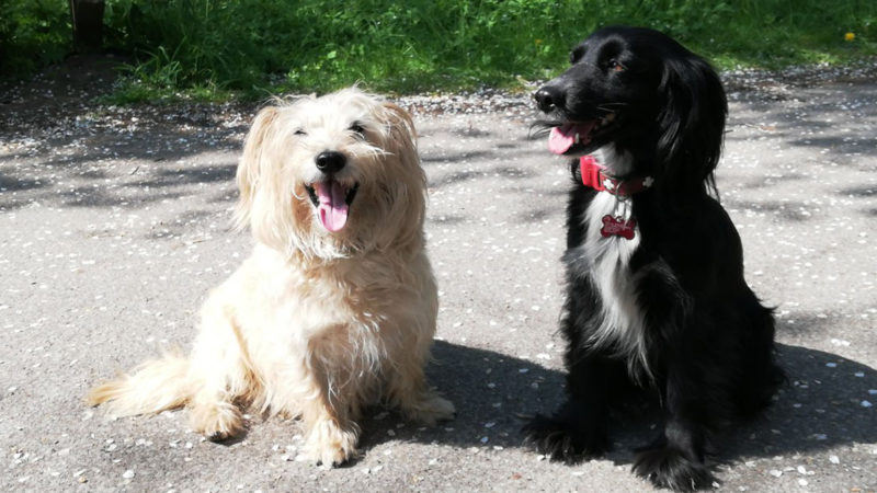 Letzter Wunsch: Neue Besitzer für Hunde (Foto: SAT.1 NRW)