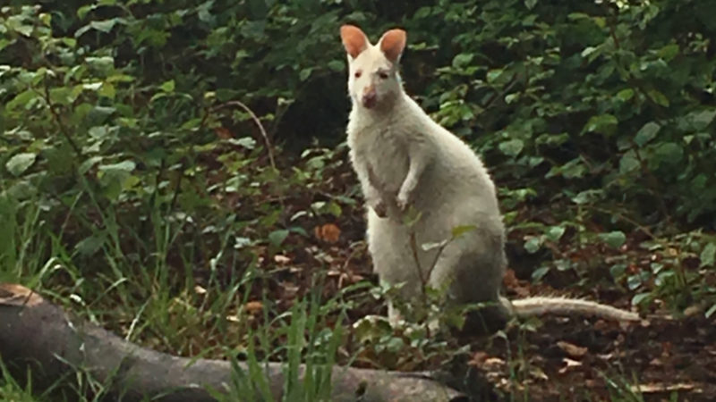 Känguru-Suche in Essen (Foto: SAT.1 NRW)