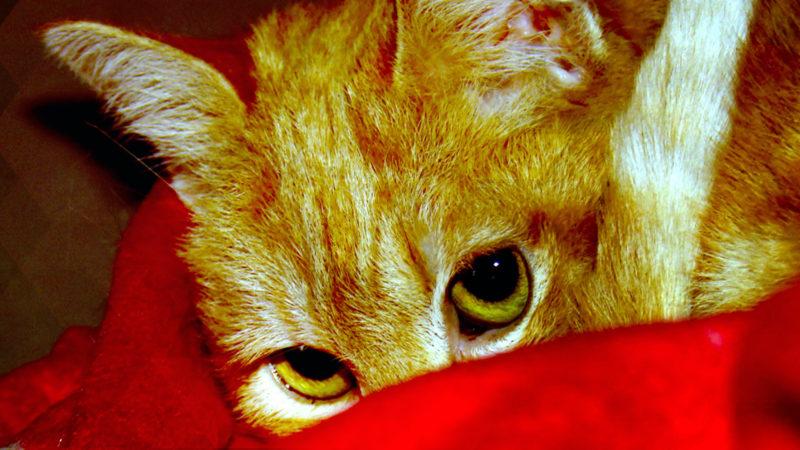 Unbekannter schändet Katze (Foto: SAT.1 NRW)