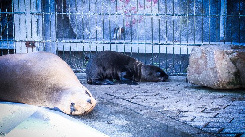 Neue Robbenbabies in Gelsenkirchen (Foto: SAT.1 NRW)