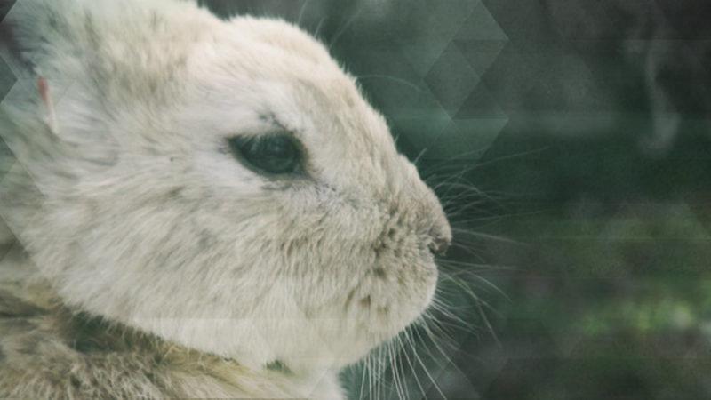 Unbekannte töten Kita-Kaninchen (Foto: SAT.1 NRW)