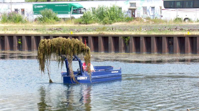 Mähboot im Dortmunder Hafen (Foto: SAT.1 NRW)