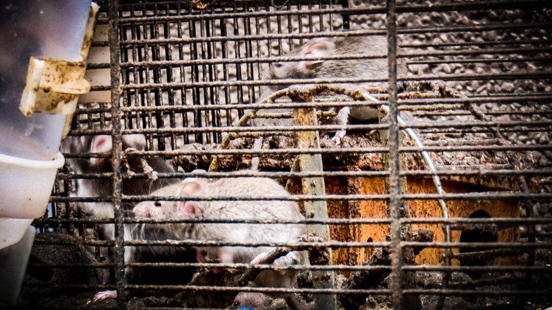 Wieder hunderte Mäuse gerettet (Foto: SAT.1 NRW)