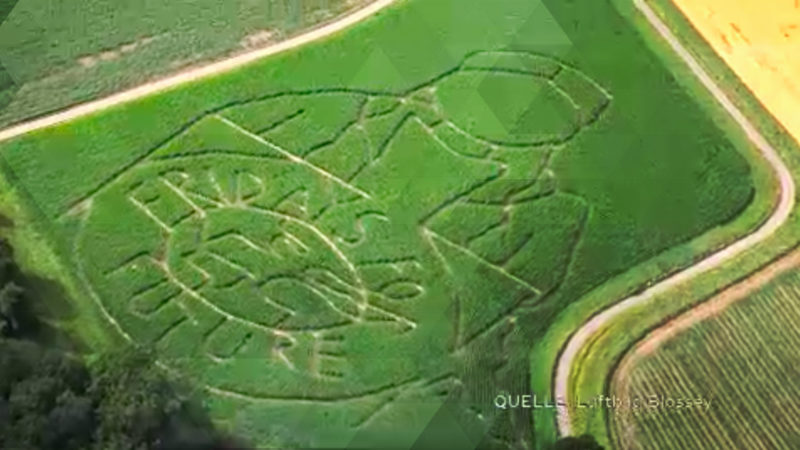 Maislabyrinth für Klimademos (Foto: SAT.1 NRW)