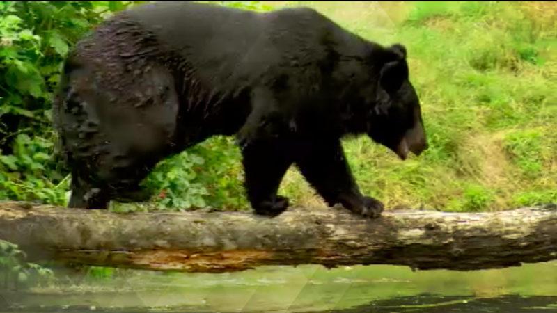 Bären trainieren für Umzug (Foto: SAT.1 NRW)